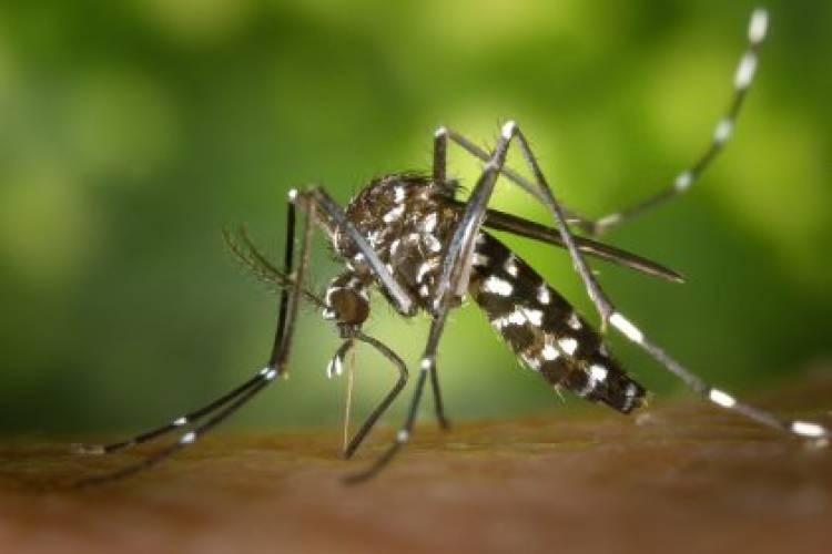 Saúde de Três Lagoas inicia 2021 com a notificação de 45 casos suspeitos de Dengue na primeira semana epidemiológica